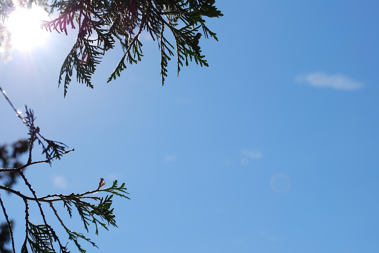 sun over a tree
