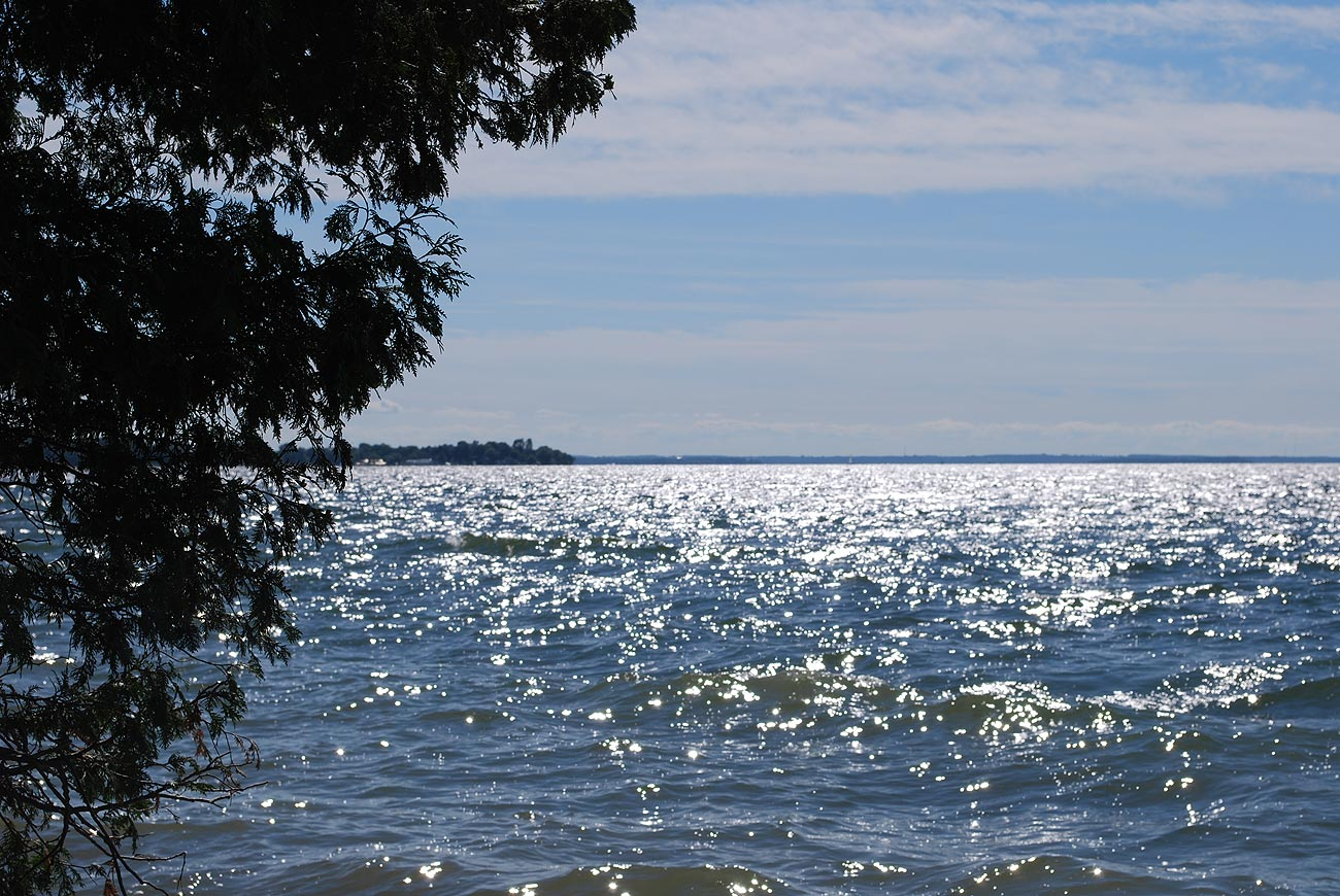 lake over a tree