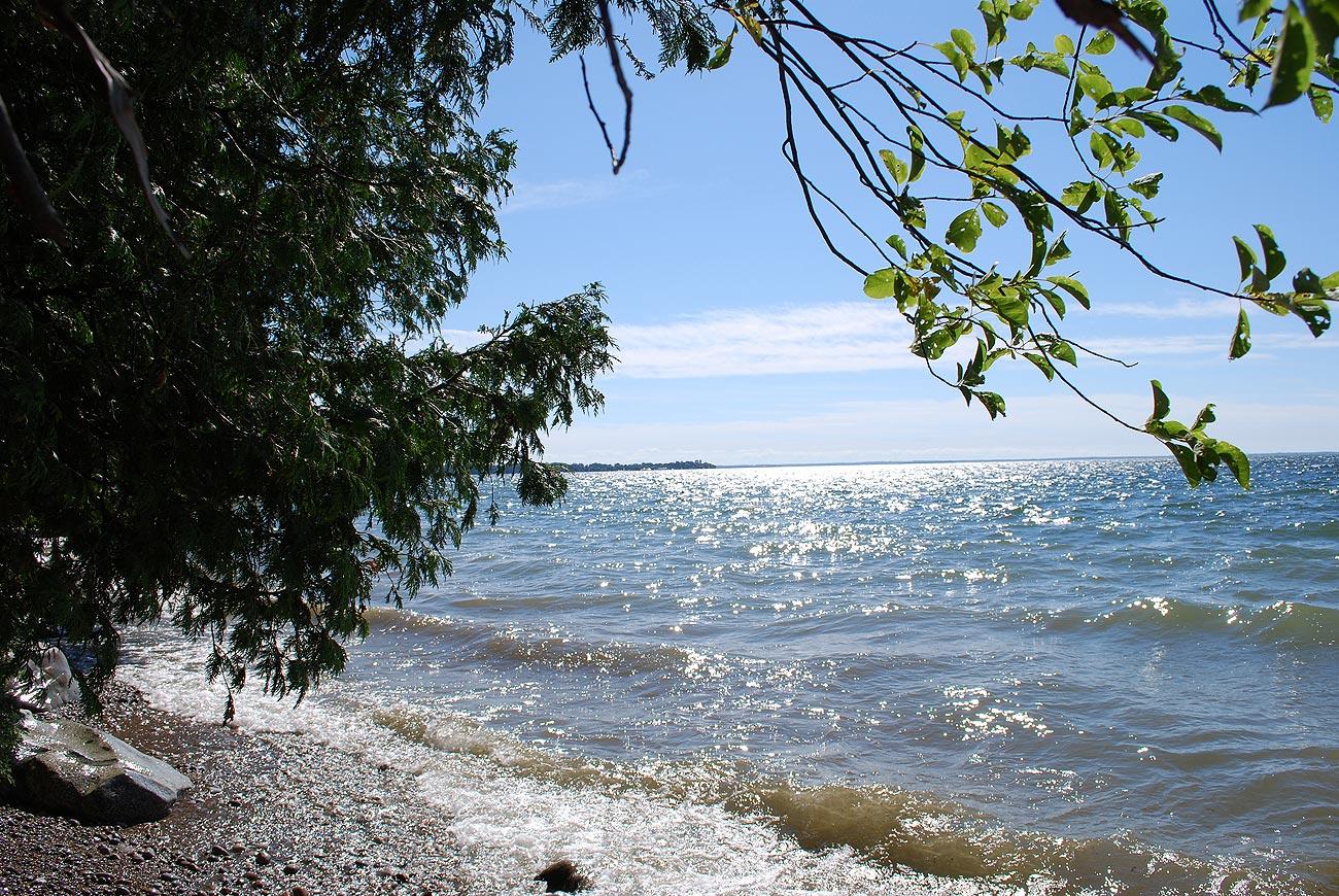 lake shore over a tree