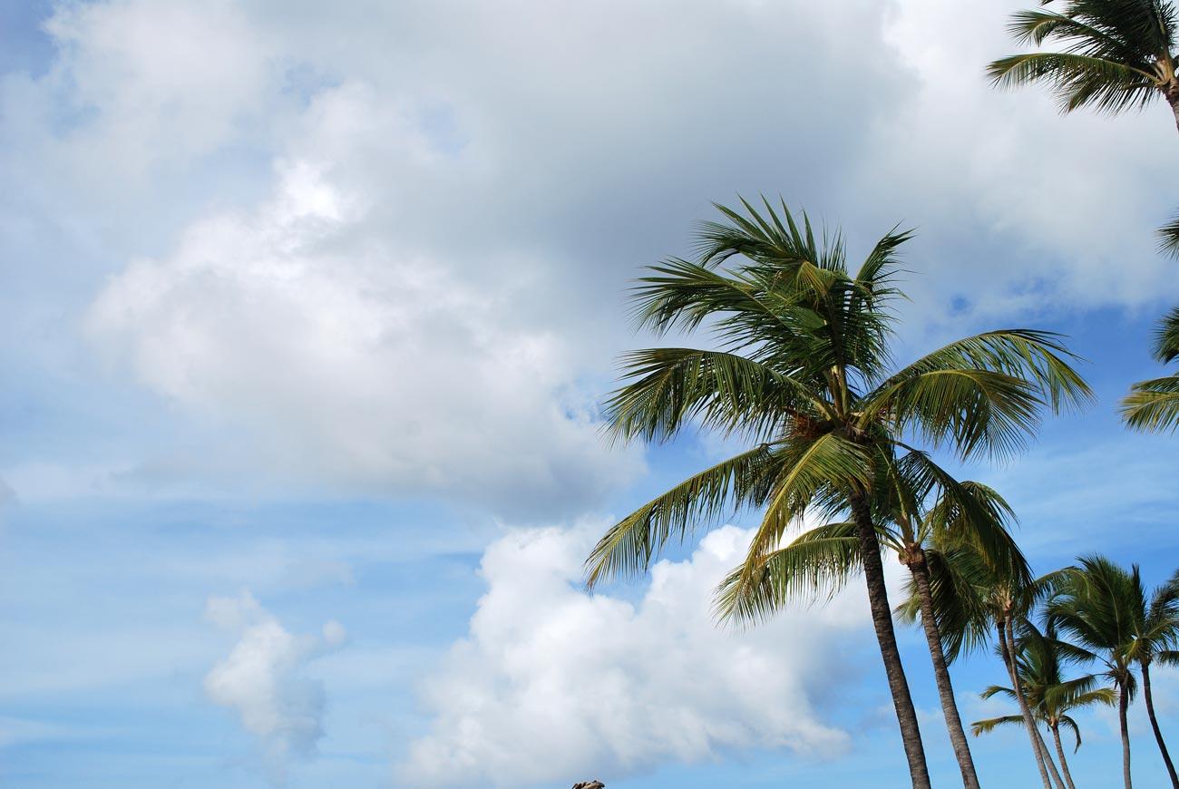 palms on sky background