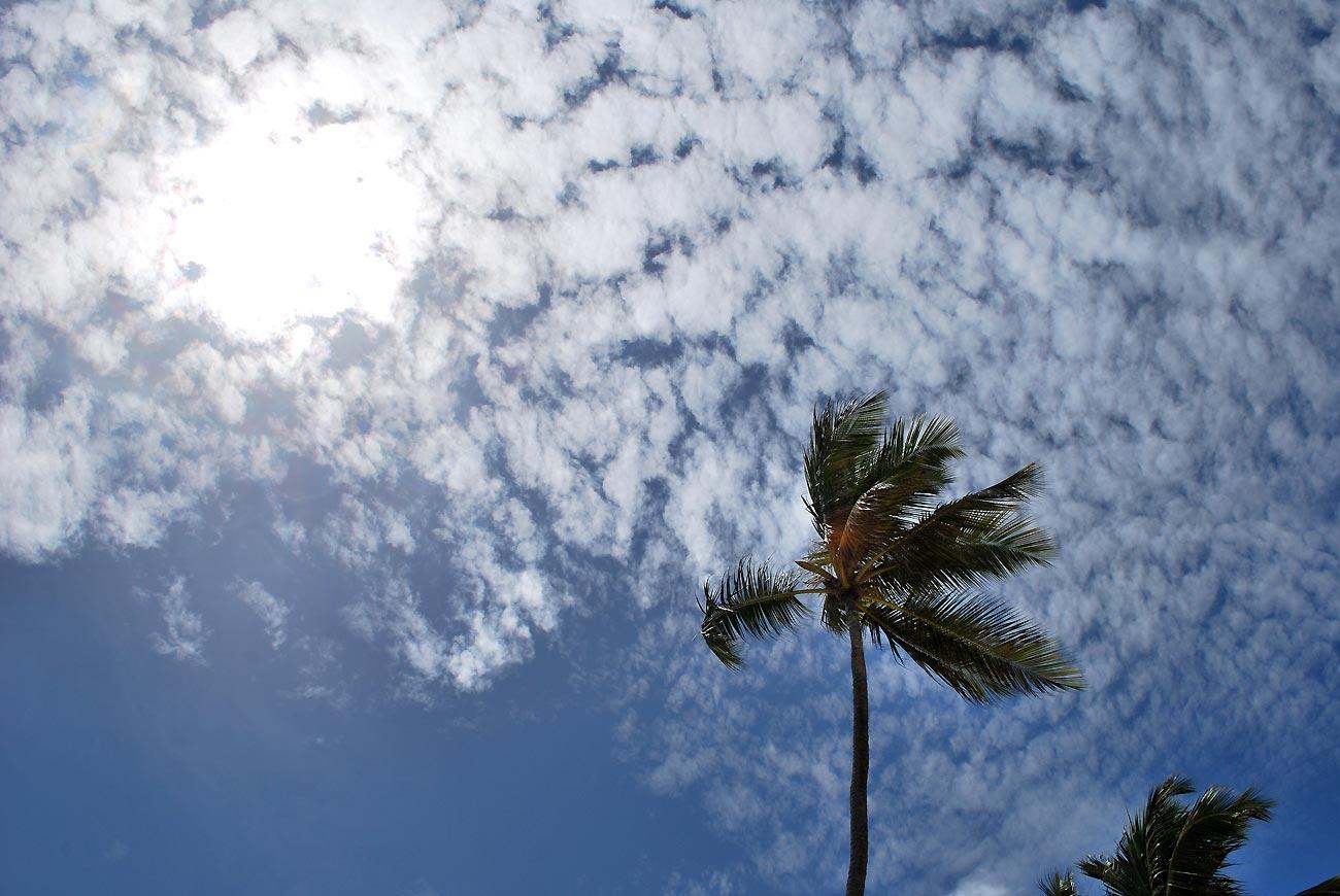palm on sky background