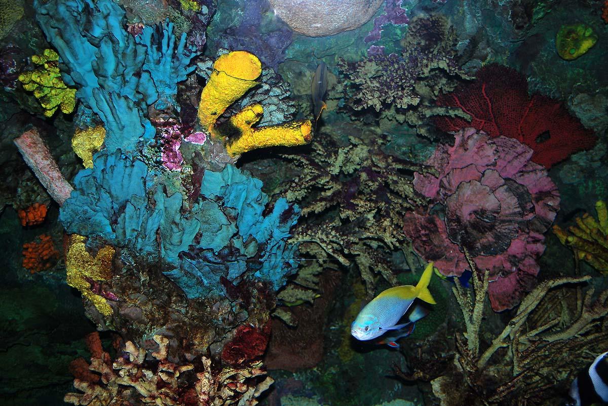 in aquarium