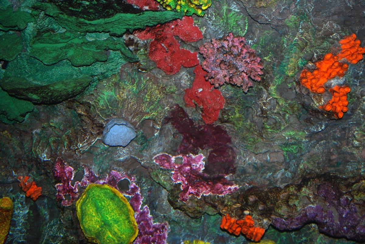 aquarium exoticism