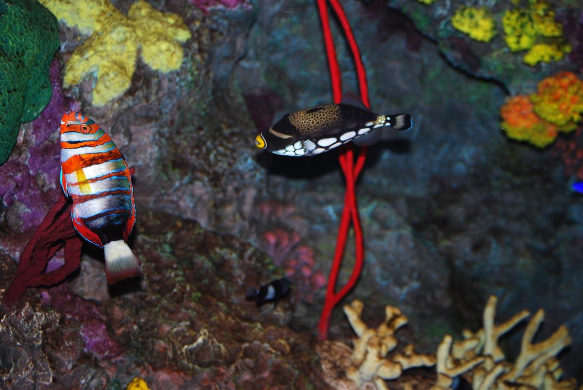 aquarium environment