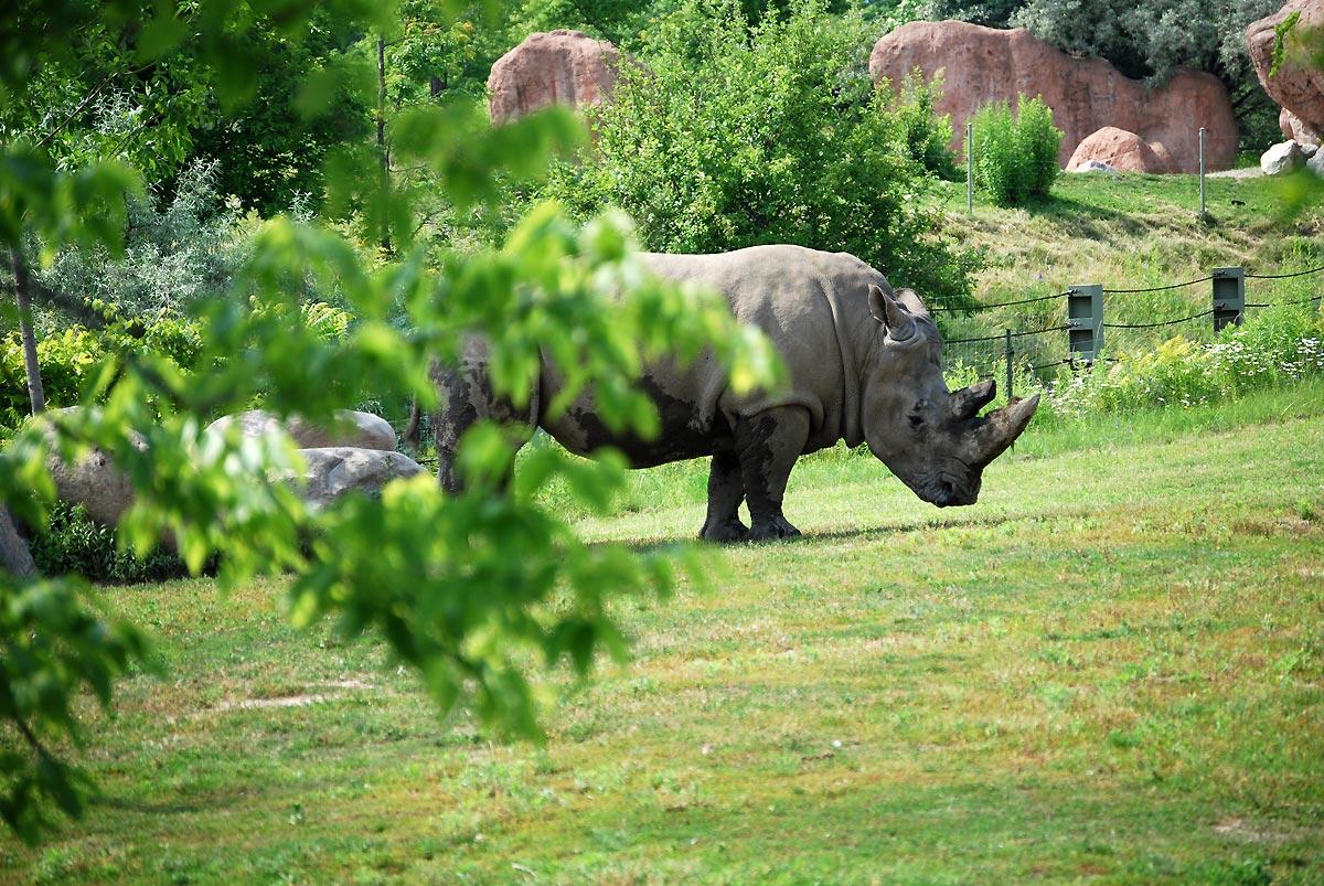 dirty rhino