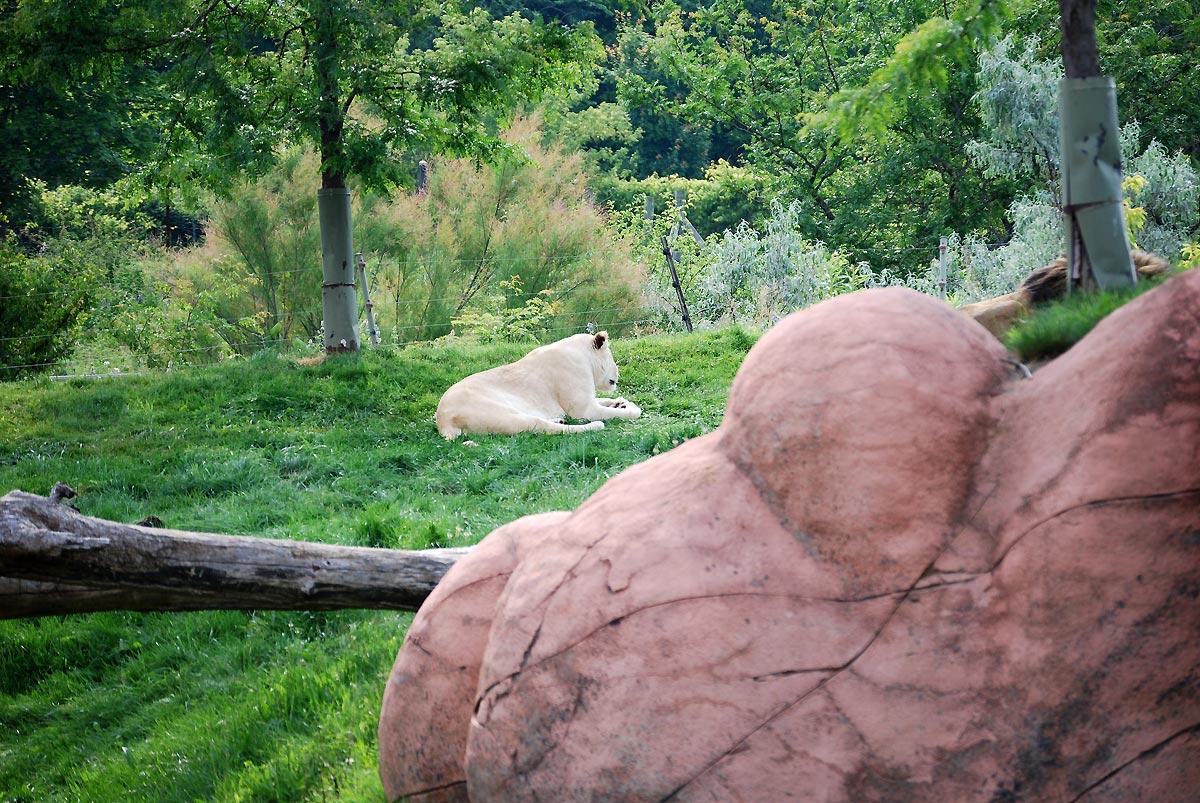 zoo nature
