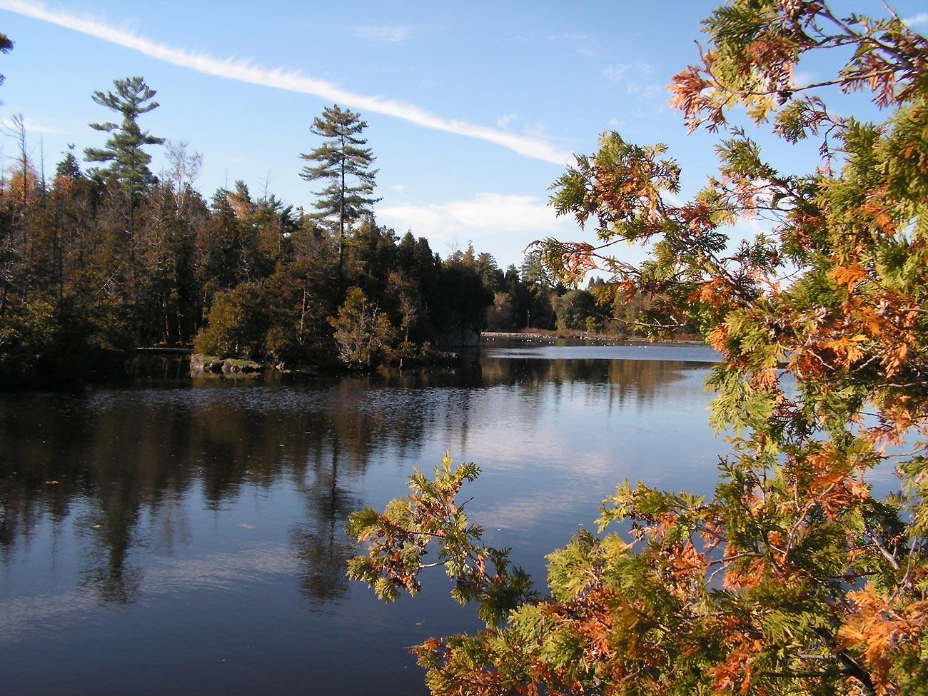 gold autumn on the lake