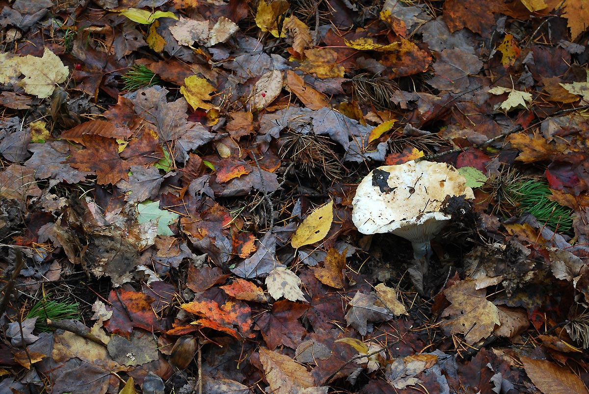 mushroom in autumn forest