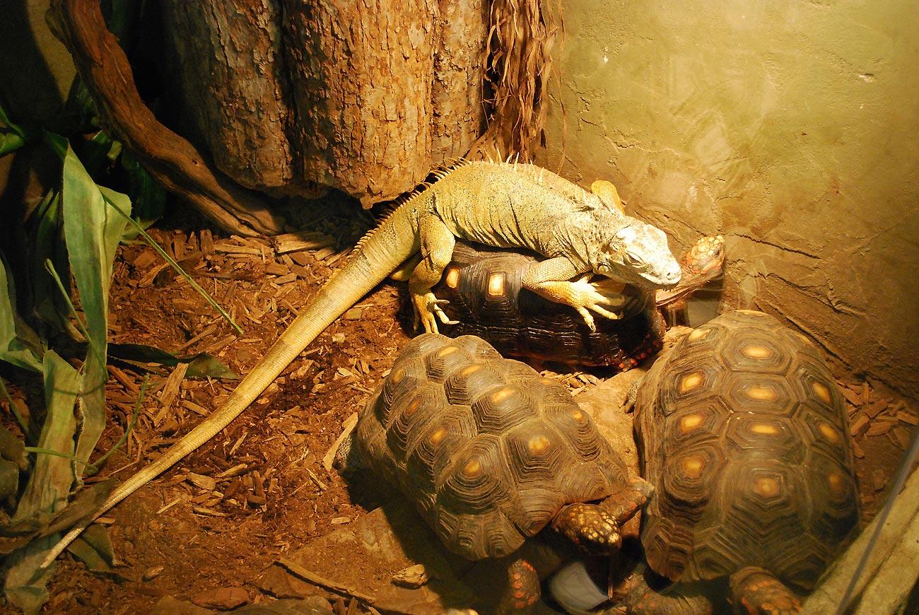 reptiles in aquarium