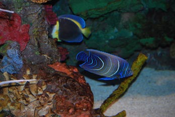 aquarium exotic fish