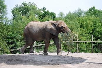 elephant with tree