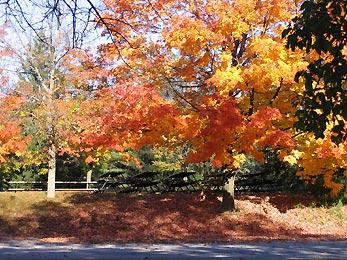 golden autumn in park